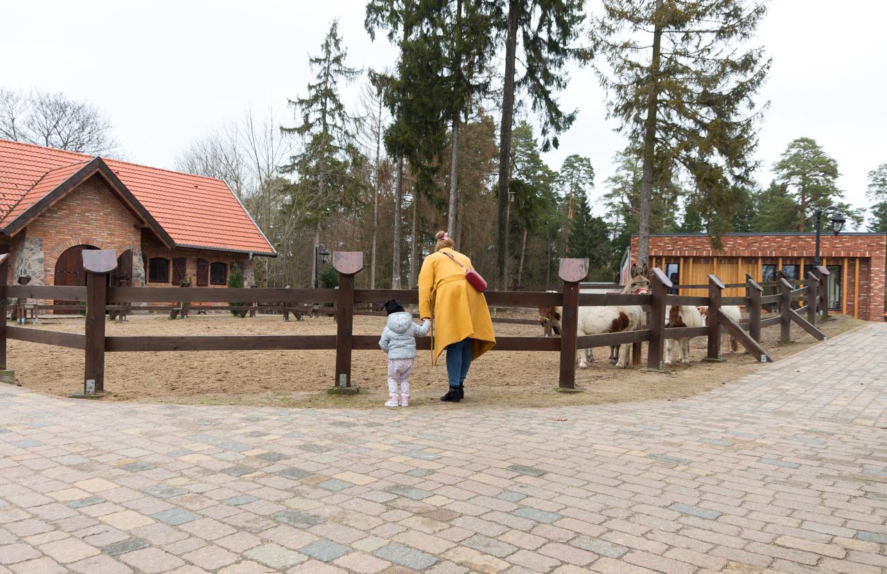 mini zoo Zalesie Mazury