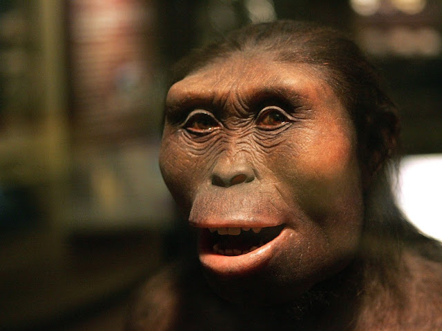 Human ancestor 'Lucy' was a tree climber, new evidence suggests