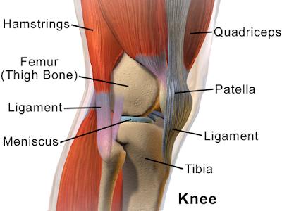 Cara meningkatkan Kekuatan Lutut
