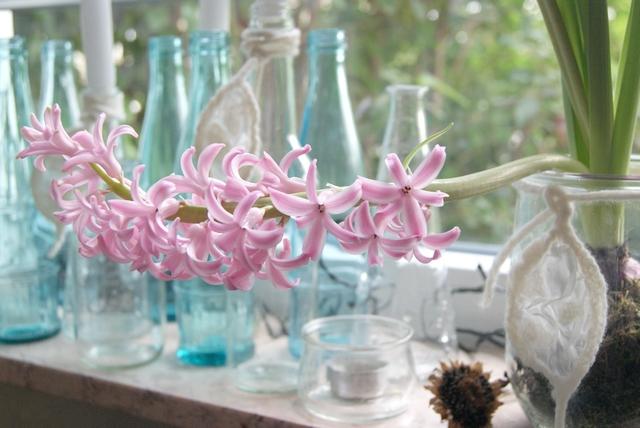 Rosafarbene Hyazinthenblüte als Frühlingsdeko auf der Fensterbank