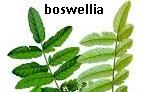 Meilleurs remèdes de plantes médicinales