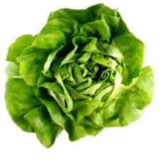 Foto de la lechuga, hortaliza color verde