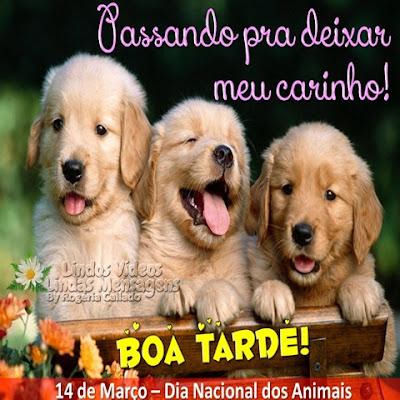 Passando pra deixar meu carinho! BOA TARDE! 14 de Março - Dia Nacional dos Animais