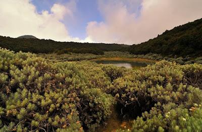 Kumpulan Foto Keindahan Tegal Alun Gunung Papandayan