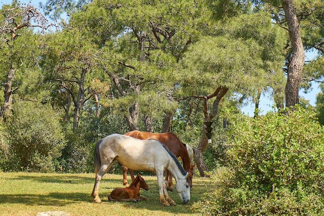 chevaux ombre arbres abri chaleur