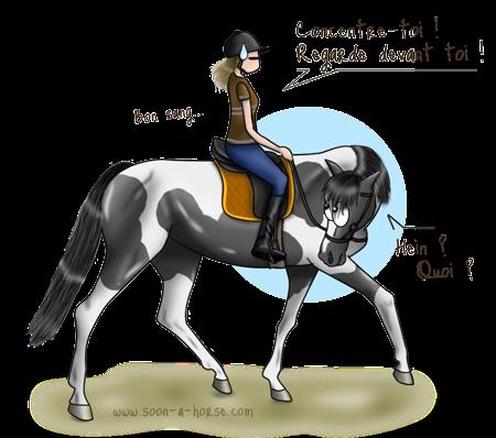 Des huiles essentielles pour la concentration du cheval