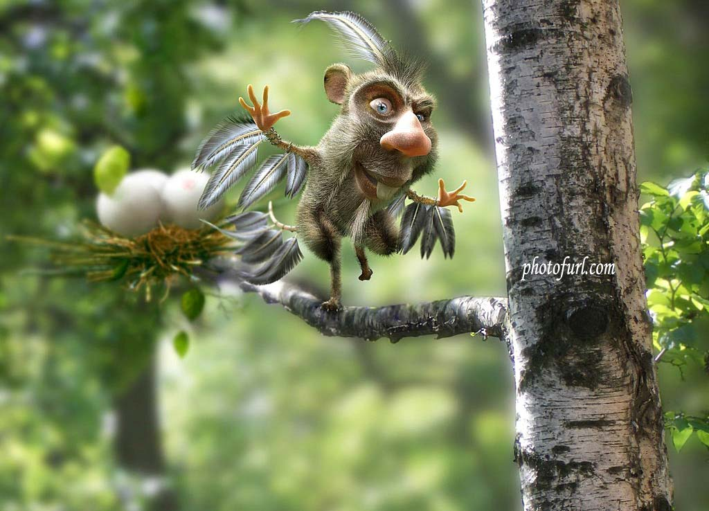 Funny world july 2012 - Funny animal wallpapers ...