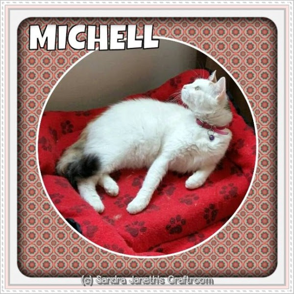 Gatos, Michell