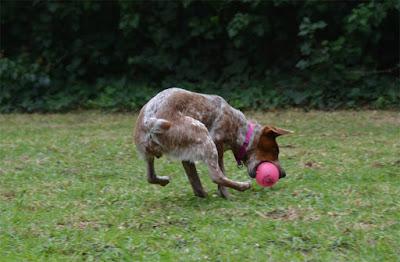 Spunky Pup glow in the dark fetch ball