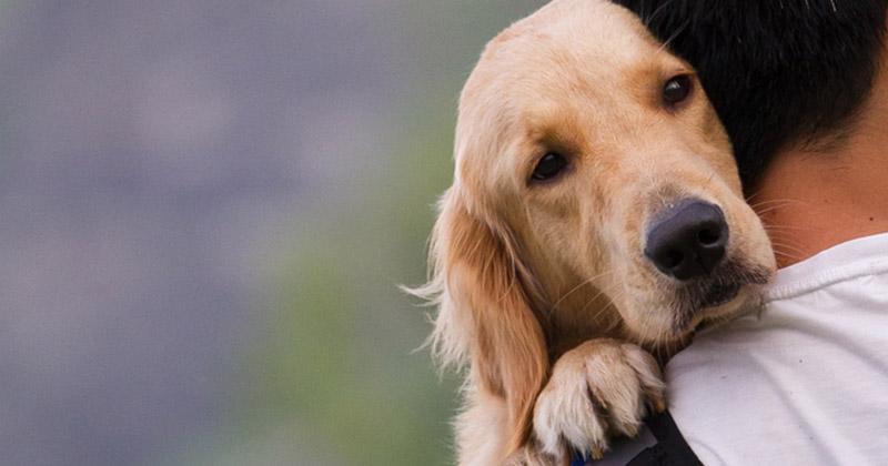 9. Kehilangan hewan peliharaan