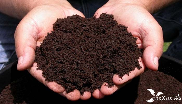 14 Cara Membuat Pupuk Kompos Sederhana Dari Limbah Kotoran Hewan