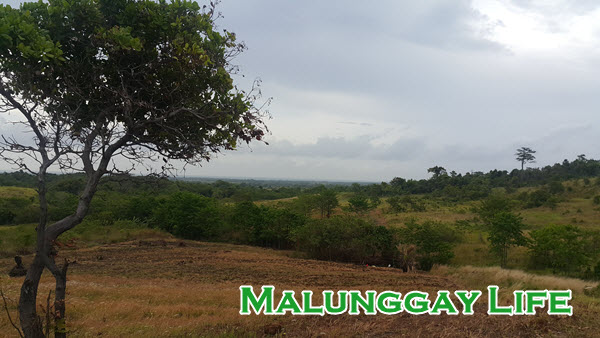 Malunggay Life's malunggay farm / moringa farm in Palawan, Philippines