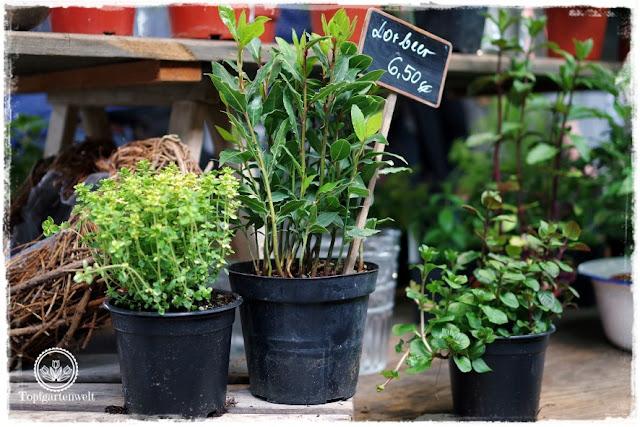 Gartenblog Topfgartenwelt Gartenmesse Stuttgart 2017: Pflanzenverkauf