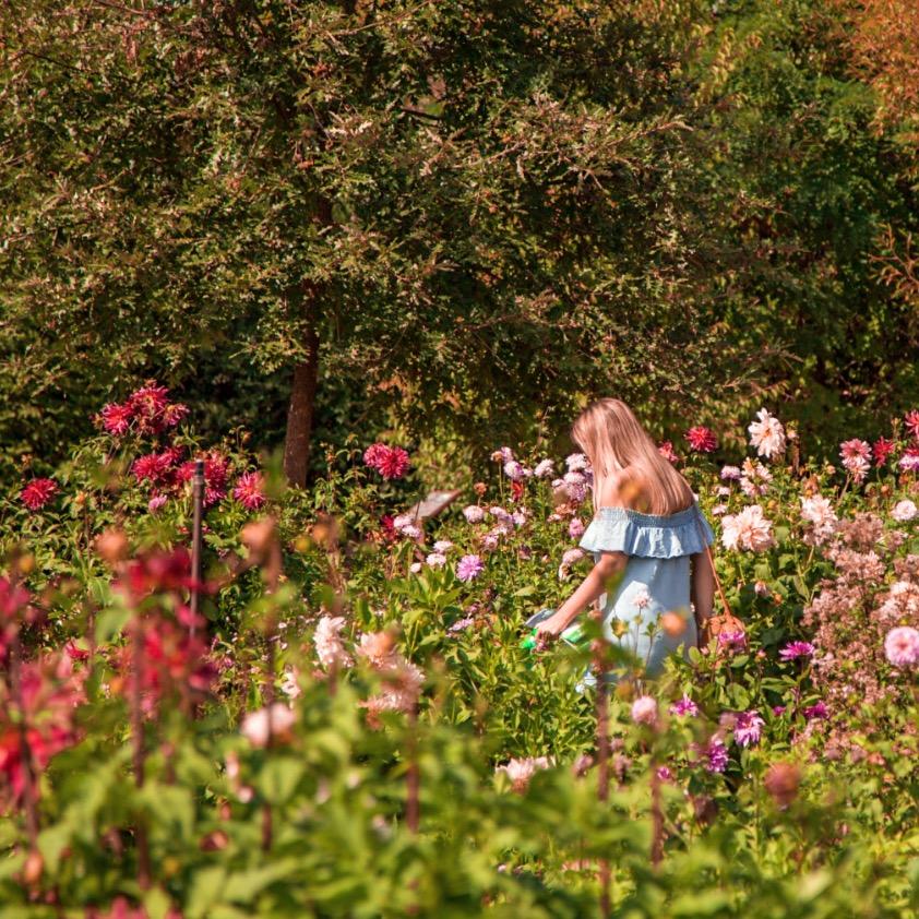 The New Blacck - Orléans - Blog - Chaumont sur Loire - Visite des jardins - fleurs