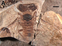 http://sciencythoughts.blogspot.co.uk/2015/11/xyelydid-sawflies-from-middle-jurassic.html