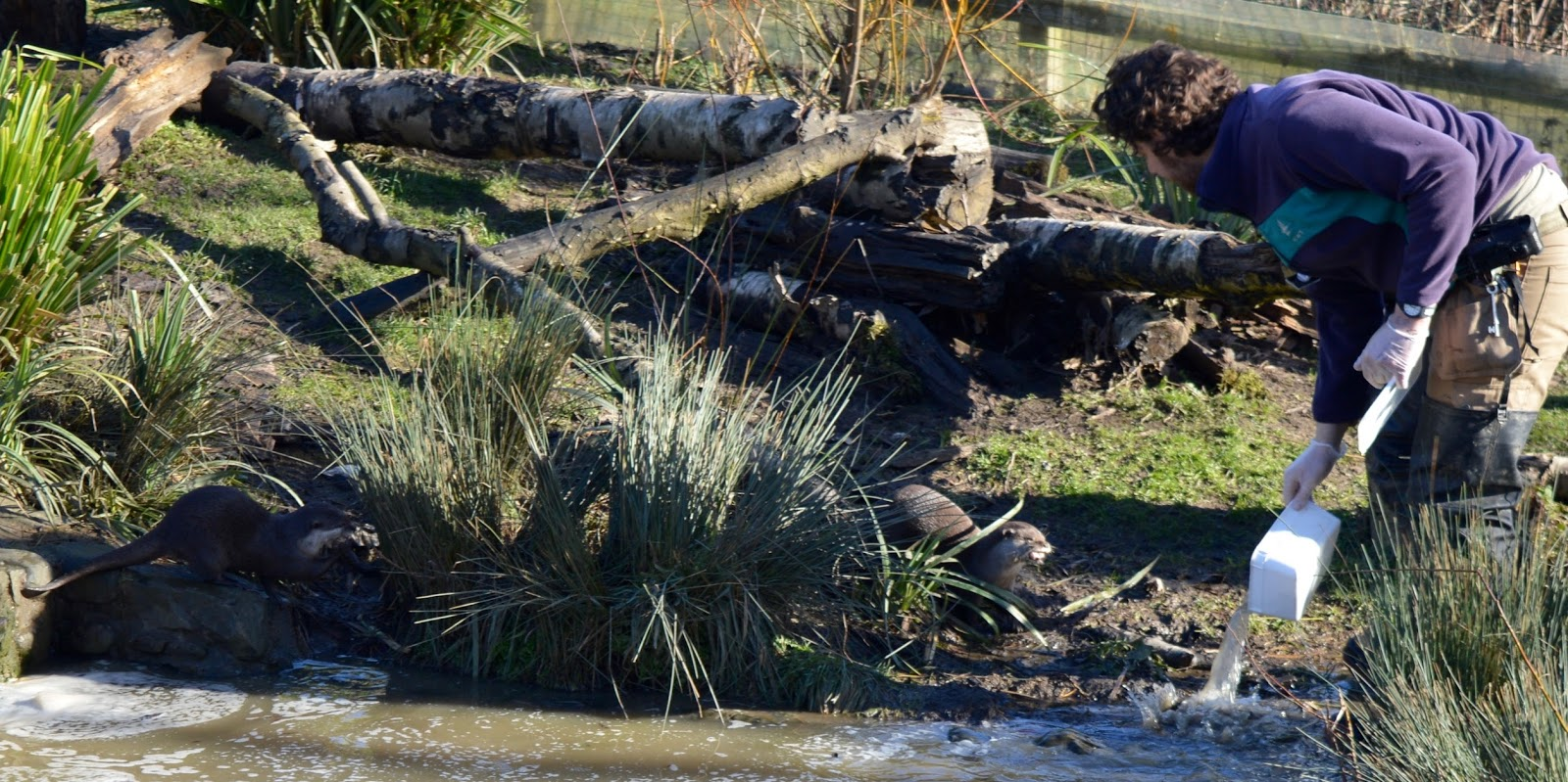 WWT Washington Wetland Centre | An Accessible North East Day Out for the Whole Family - otter keeper feed and talk