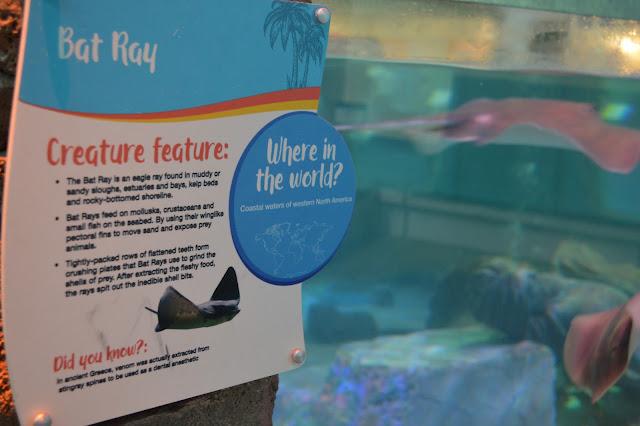 Utah aquariums