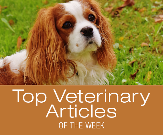 Top Veterinary Articles of the Week: Ear Care, Phytonutrients, and more ...