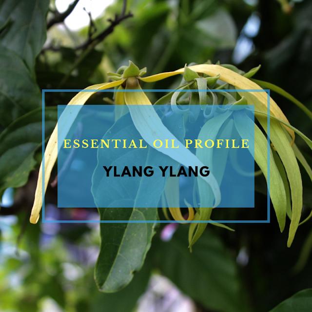Essential Oil Profile: Ylang Ylang