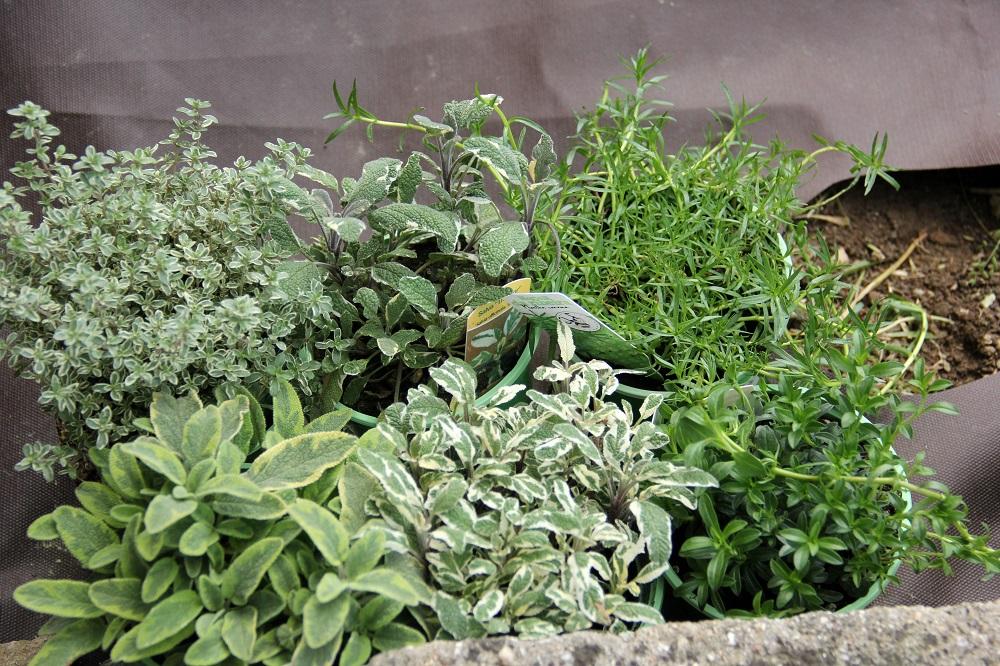 Fabuloso Como criar um jardim de ervas aromáticas   Reservatório de Sensações FN17