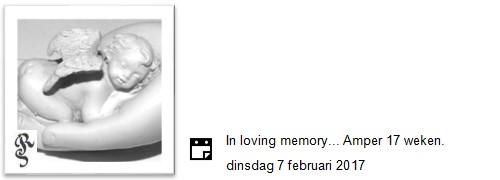 loving memory amper 17 weken