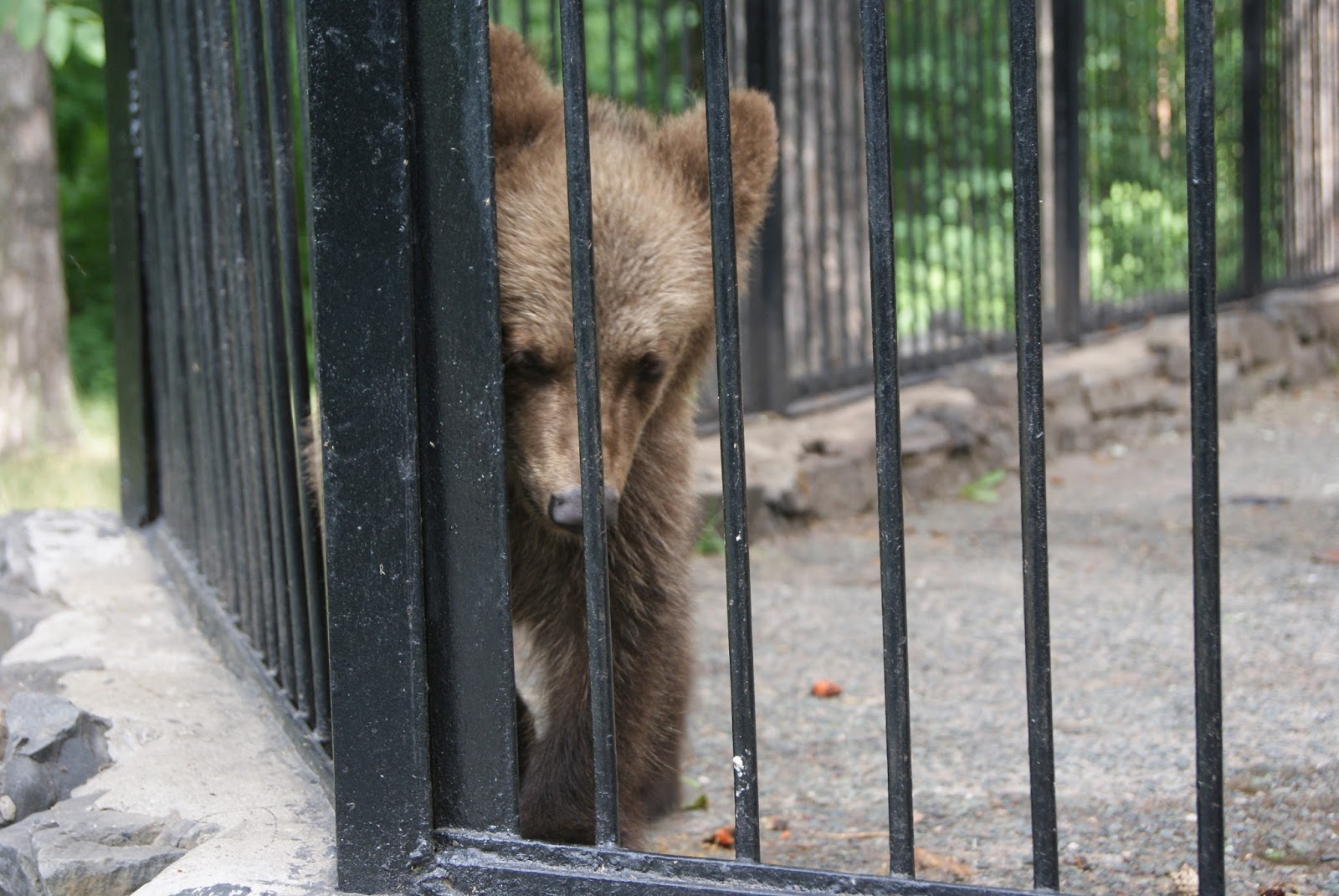 Для, открытки новосибирский зоопарк