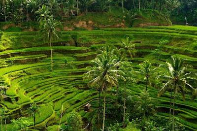 Tegalalang Rice Terrace - Salika Travel 3H2M Bali Kintamani