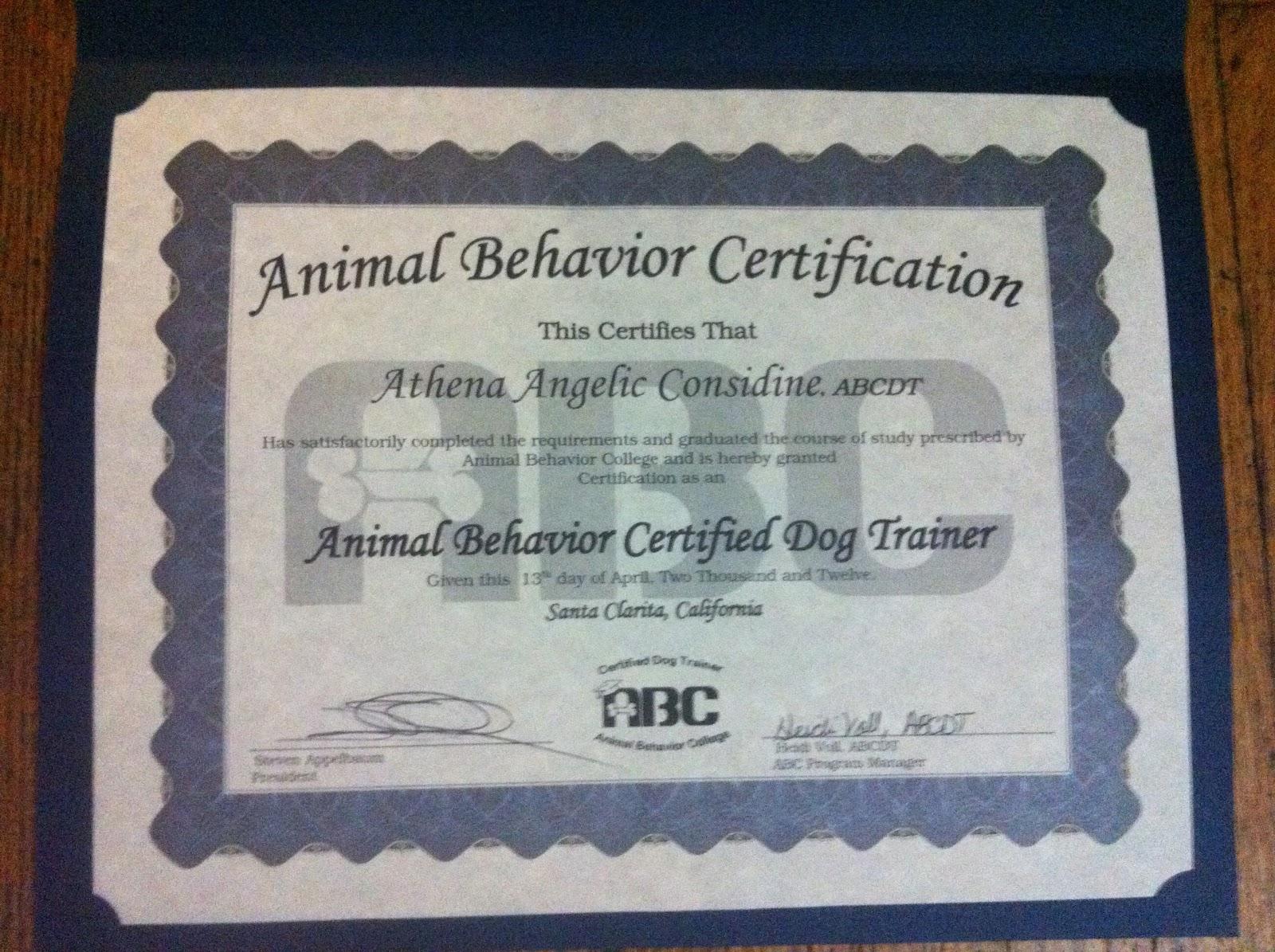Such Good Dogs Animal Behavior Certified Dog Trainer