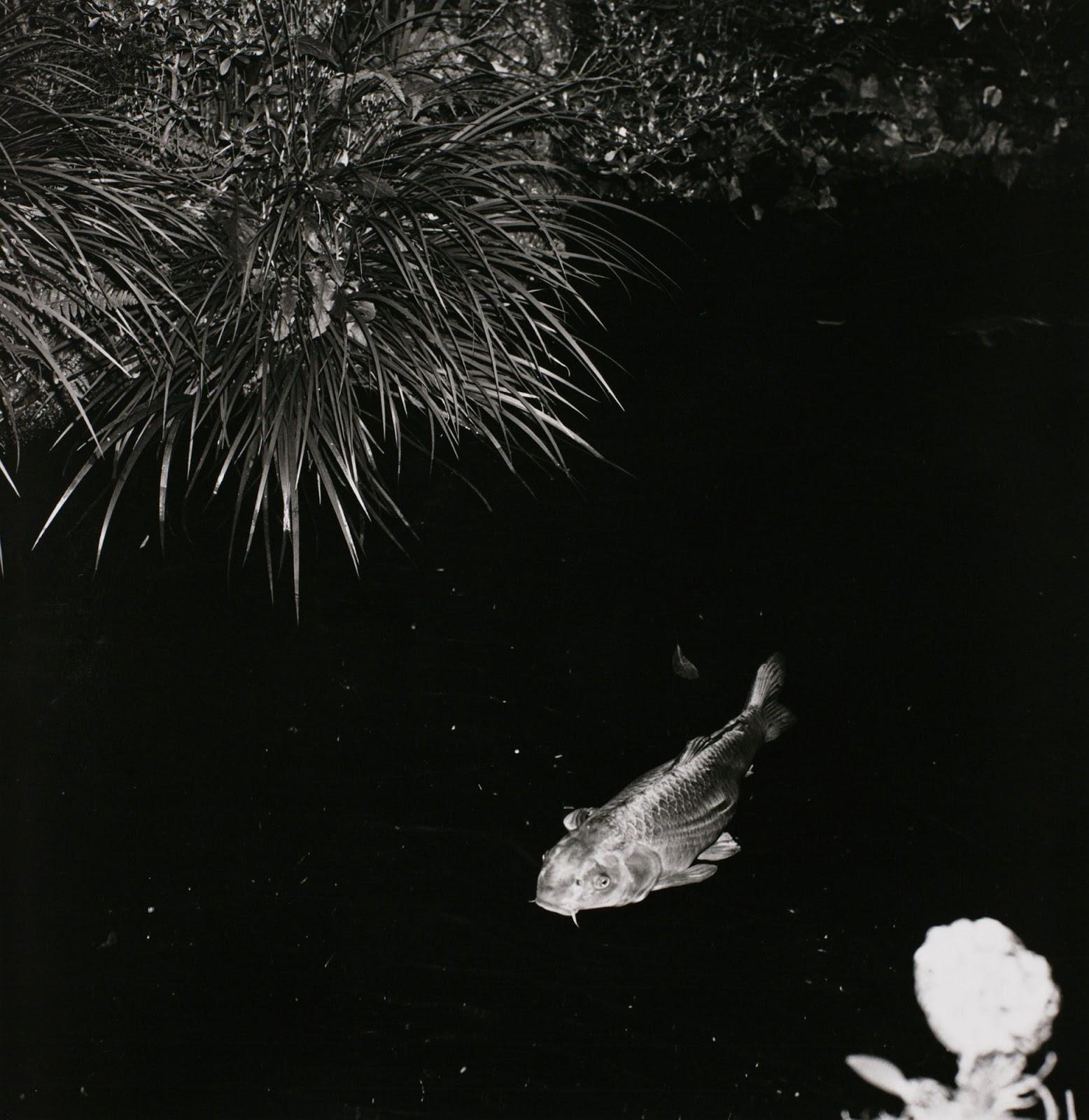 exótico ahogo