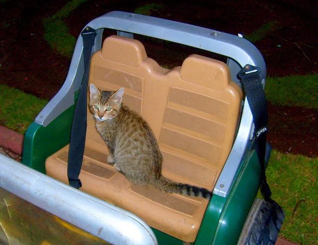Koty w Maroko. Mohammedia