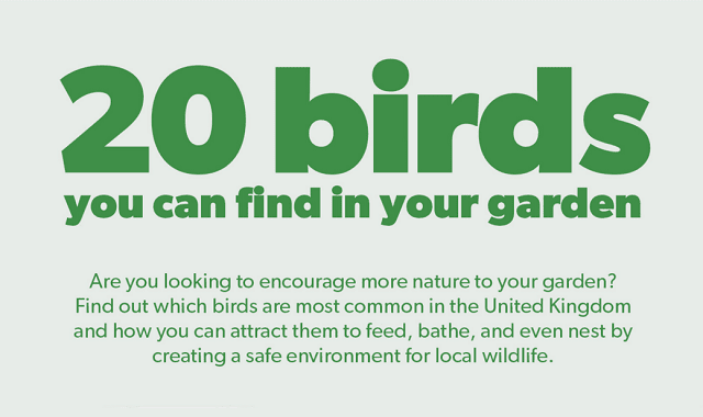 20 Most Common Garden Birds
