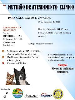 AMBIENTE: Mutirão de atendimento clínico para animais (07/10)