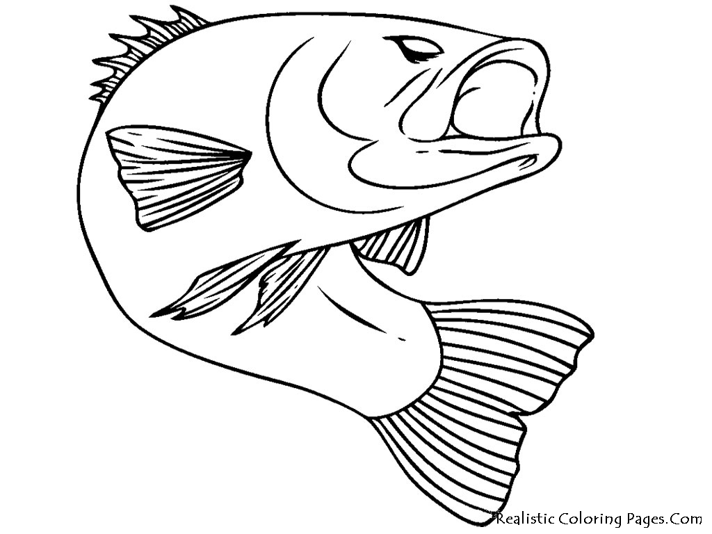 Realistic fish coloring pages realistic coloring pages for Printable fish coloring pages