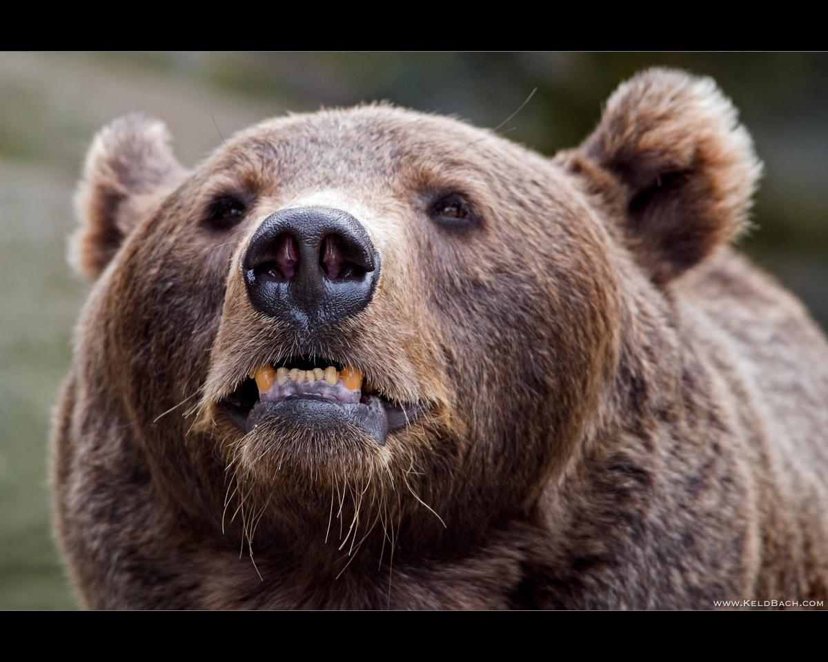 Morton's Musings: Angry bear