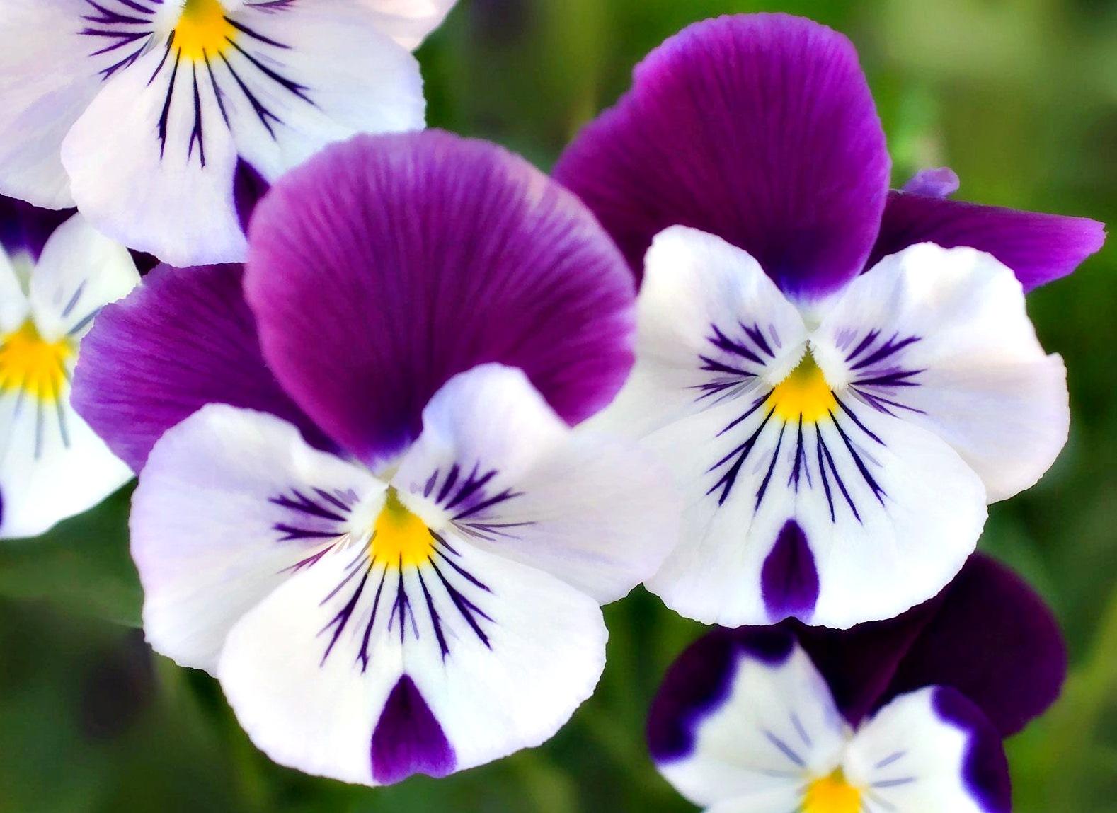Contoh Gambar Vas Bunga Dari Tanah Liat Mika Put