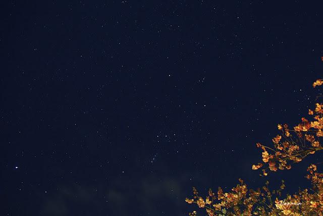 伊豆・河津櫻祭,夜櫻與獵戶座