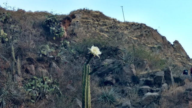 cactus flower near canyon peak