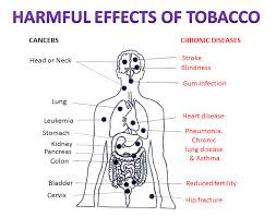 tobacco effect on health
