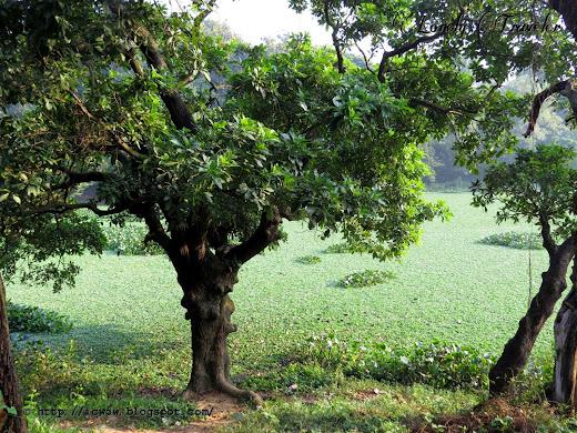 national botanic garden, dhaka