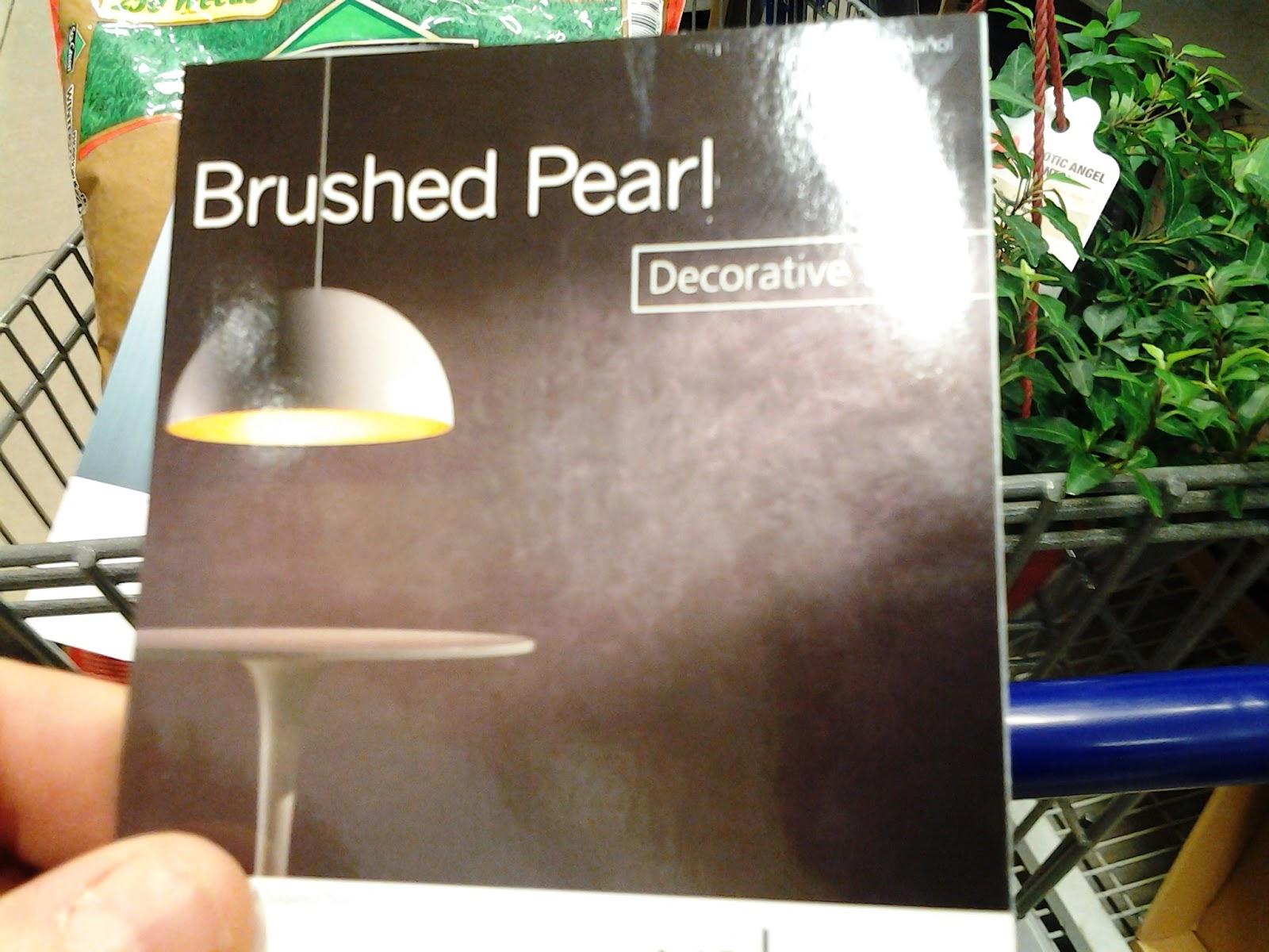 Brushed Pearl Maybe