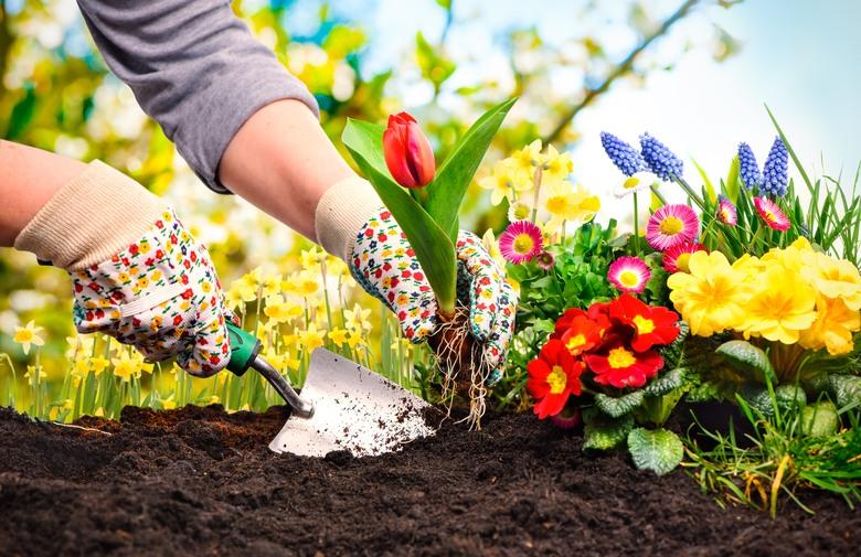10 herramientas b sicas para jardiner a amigos de la for Utiles de jardineria