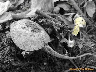 Ohio mystery small garden terrapin rear