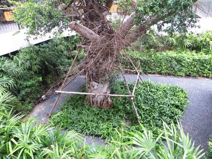 Дерево в торговом центре
