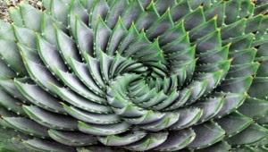 Γνωρίστε το «φυτό της αθανασίας»: Δείτε που βοηθά ο θαυματουργός χυμός του