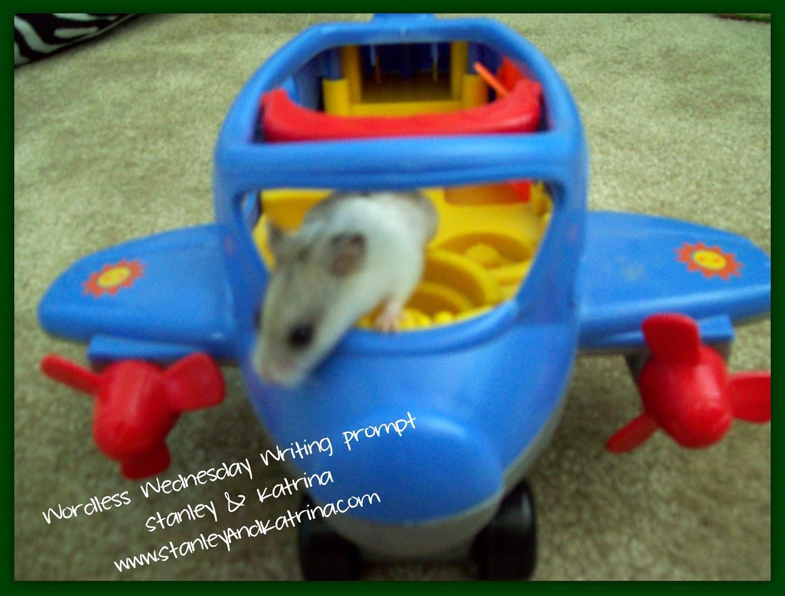 My Favorite Animal, Hamster