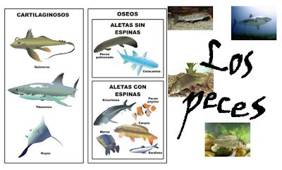 http://ceiploreto.es/sugerencias/cplosangeles.juntaextremadura.net/web/curso_3/naturales_3/peces/peces.html
