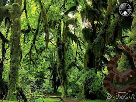 Funny Wallpapers Forest Screensaver Animated Screensavers Aquarium Screensaver Free