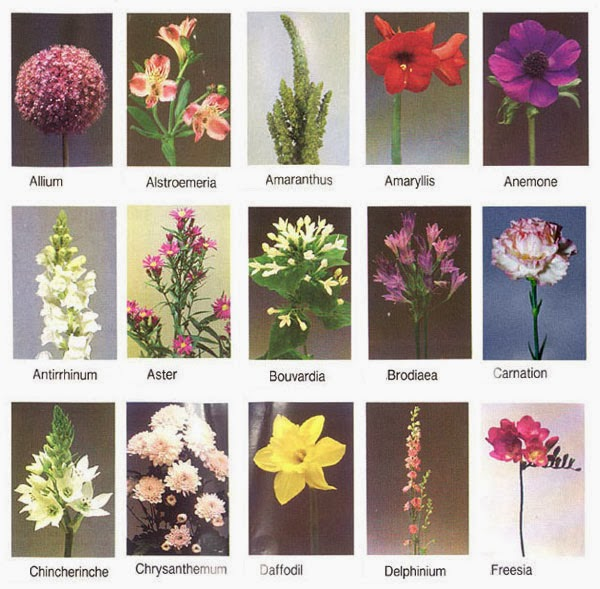 Flowers Names Wallpapers