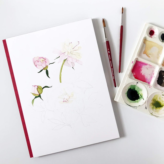 peonies, watercolor, painting process, Anne Butera, My Giant Strawberry