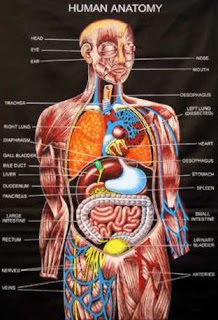 Anatomy and physiology study guide and course for students, nurses.